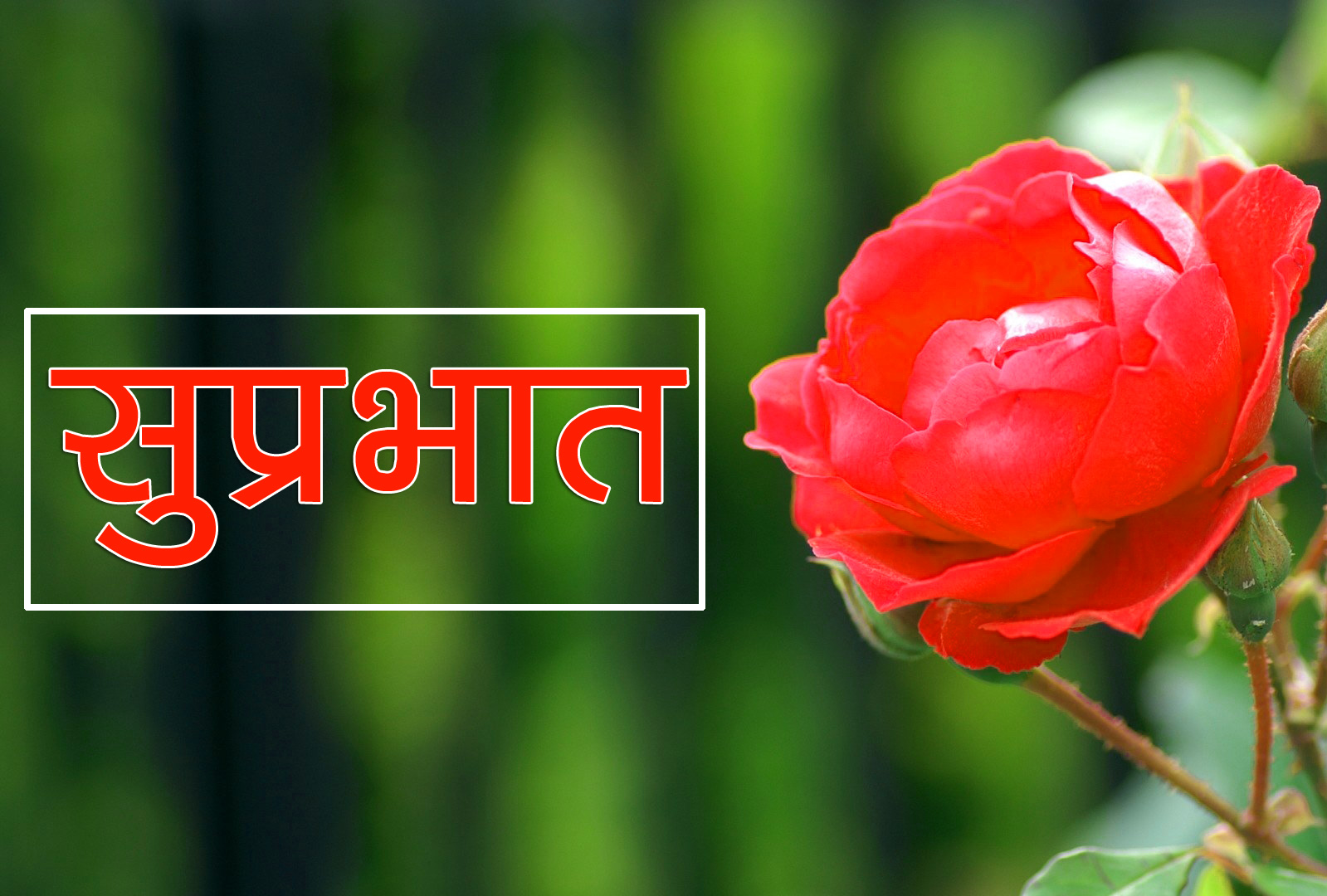Flower Suprabhat Images 23