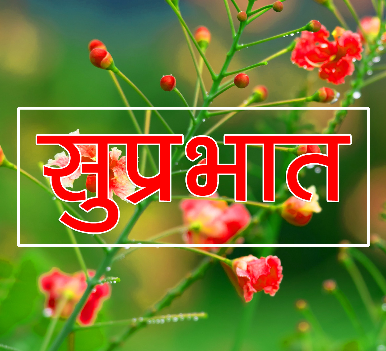 Flower Suprabhat Images 3
