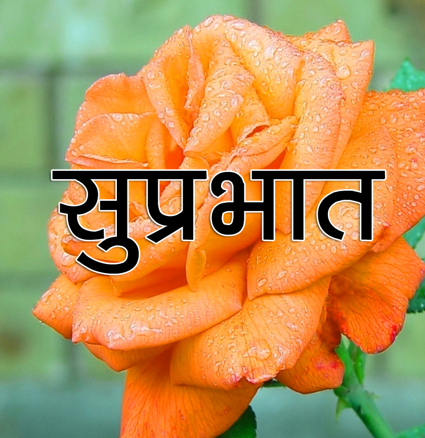 Flower Suprabhat Images 6