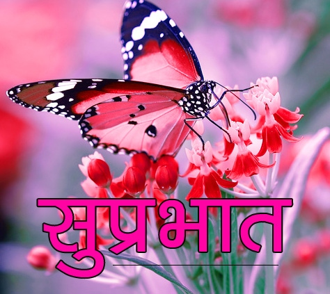 Flower Suprabhat Images 9