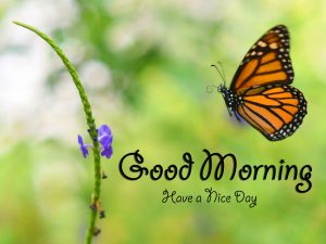 Free butterfly good morning Wallpaper