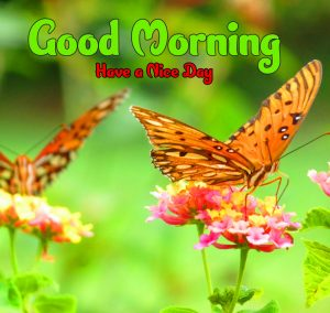Free butterfly good morning Wallpaper Dowload