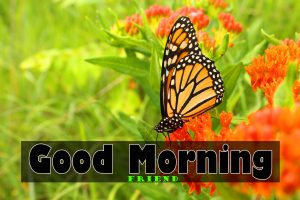 Free butterfly good morning Wallpaper Download