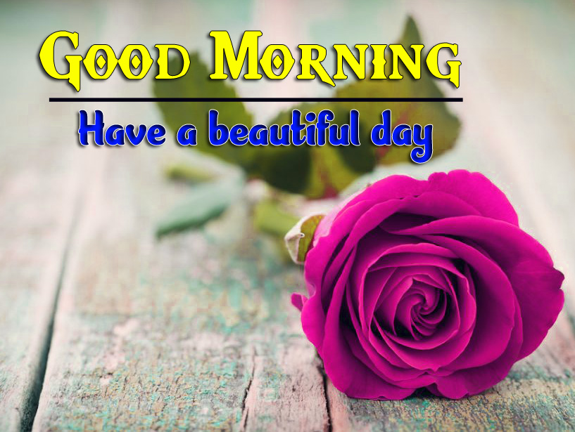 Sweet Red Rose Flower good morning Images Pictures for Whatsapp