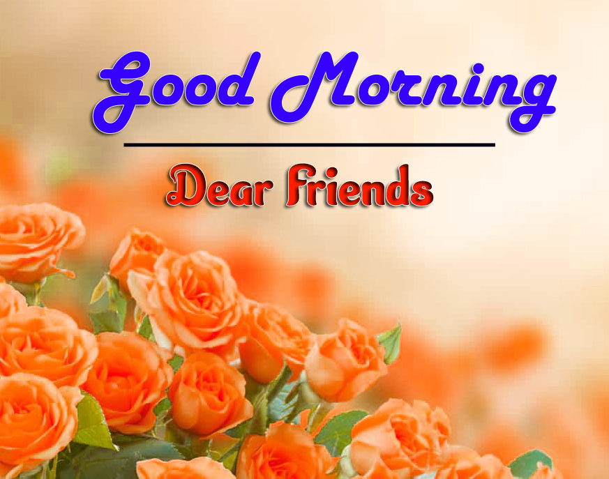 Flower good morning Images Photo Free Download