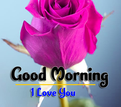 Flower good morning Images Pics Free Download New