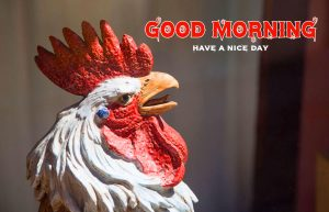 Good Morning Rooster Wallpaper HD