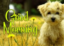 Lover Good Morning Pics Wallpaper Download 19