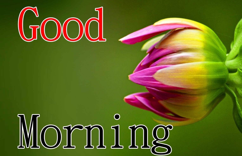 Nature Good Morning Wallpaper 2