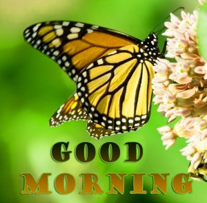 New Top butterfly good morning Images