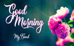 New Top good morning have a nice day Images Download