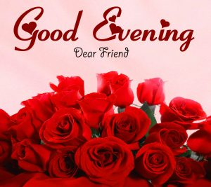 Rose Good Evening Photo for Whatsapp