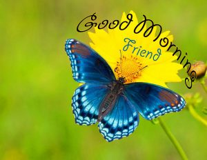 butterfly good morning Images Dwnload