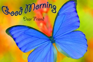 butterfly good morning Photo for Whatsapp 2