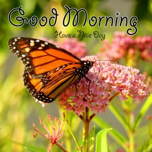 butterfly good morning Photo for Whatsapp