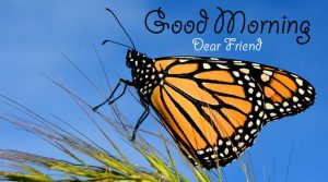 butterfly good morning Pics Free