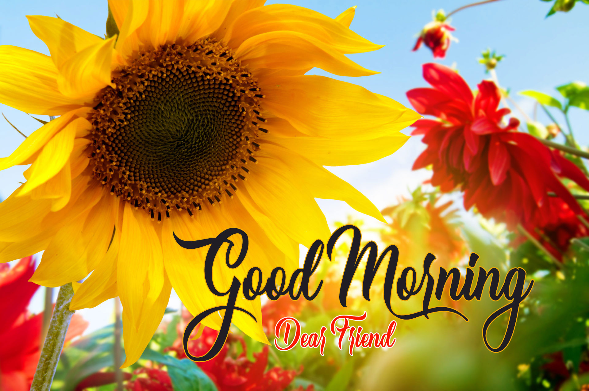 Top 100+ Nice Good Morning Images Download For Whatsapp / Facebook