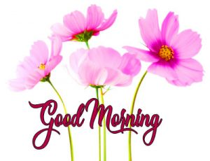 good morning have a nice day Pics Pictures for Whatsapp