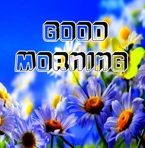 Beautiful free Good Morning Images Pics Download