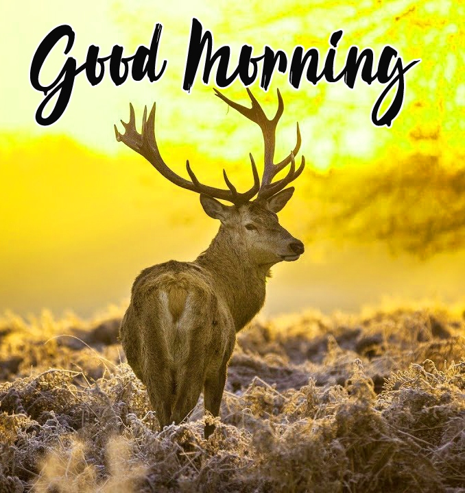 Good Morning Images Wallpaper Latest Free Download