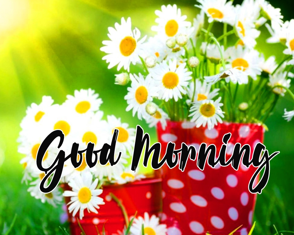 New Best Flower Good Morning Images Pics Download