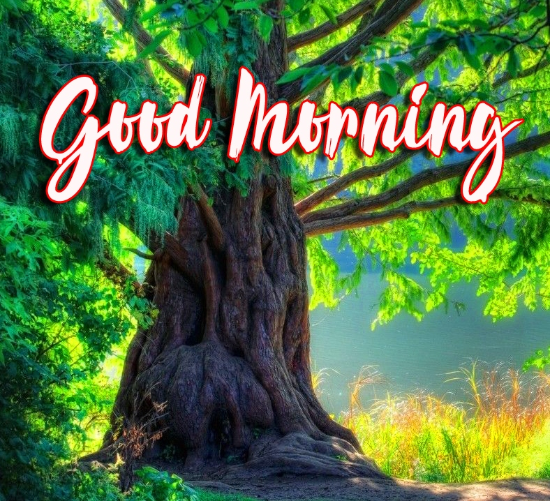 Good Morning Images Wallpaper Pics With Nature