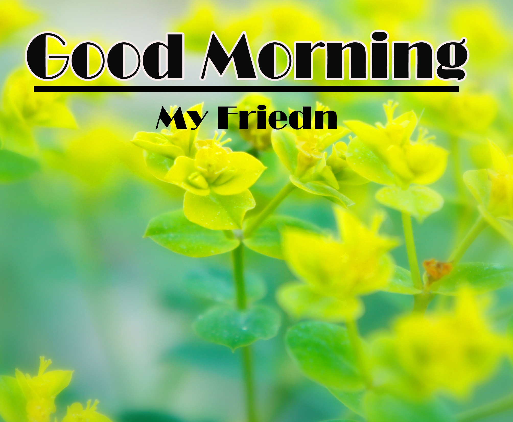 Good Morning Images Pics Download Latest