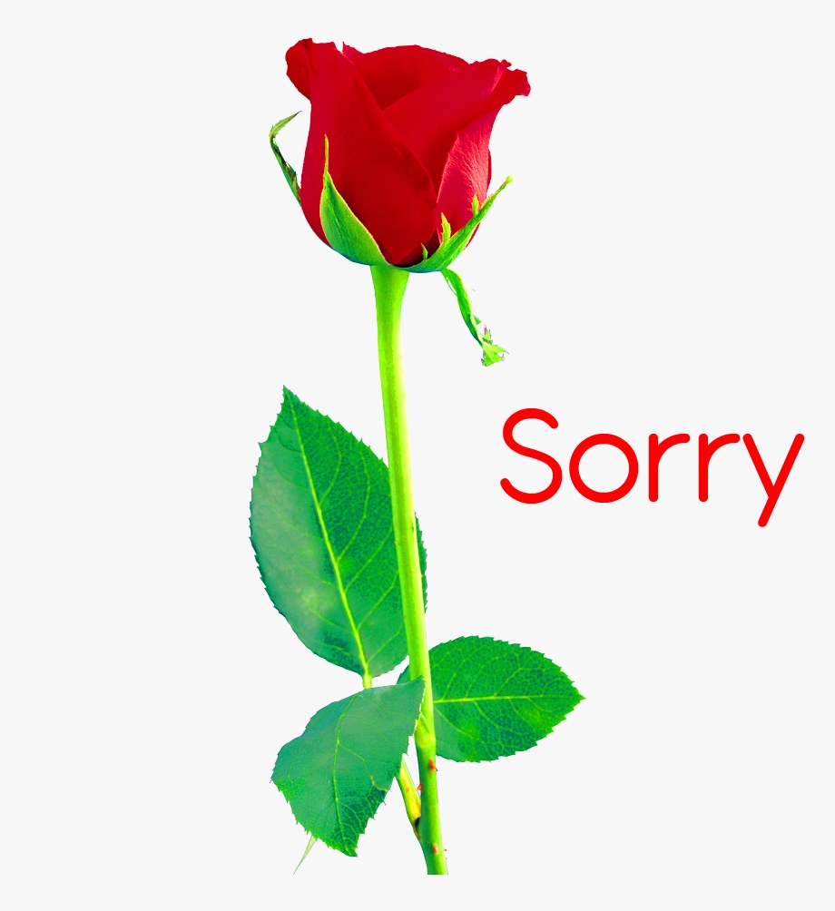 I am Sorry Images Download