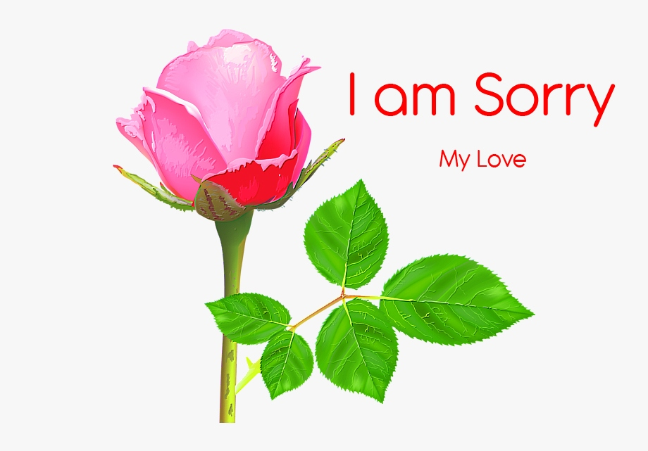 I am Sorry Images Pics Download for Facebook