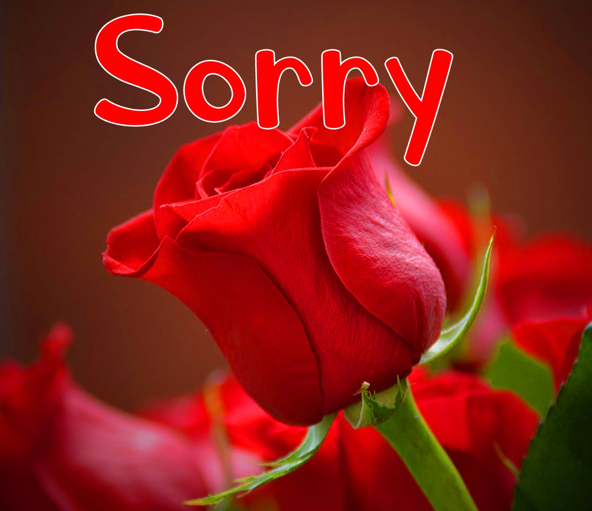 I am Sorry Images Pics Free Download Latest