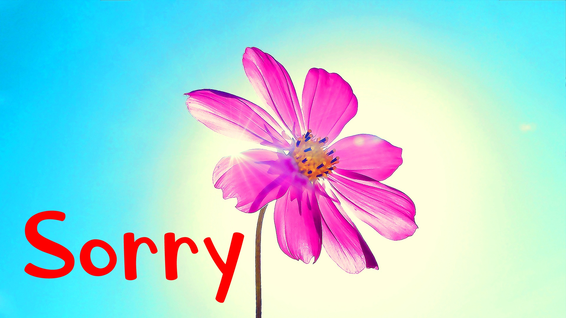 I am Sorry Images Wallpaper Photo Download
