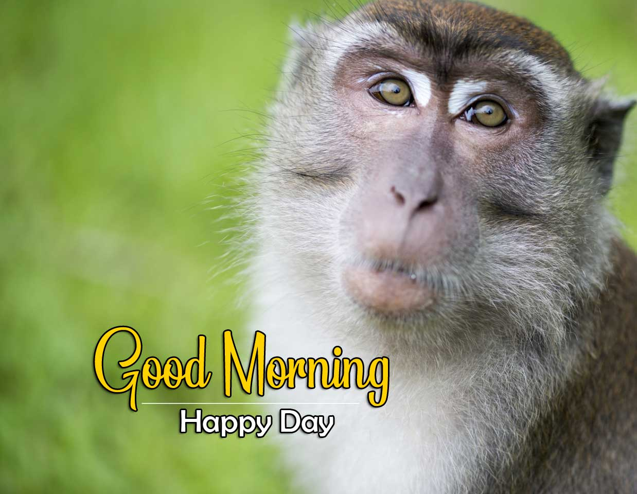 All Funny Good Morning Pics HD 1080P
