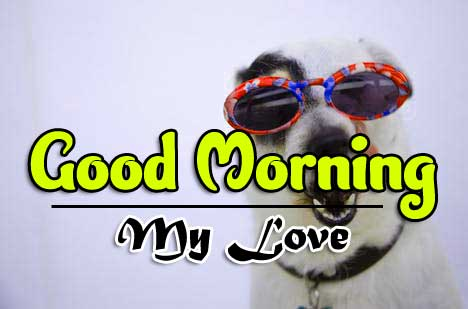 All Funny Good Morning Wallpaper Free