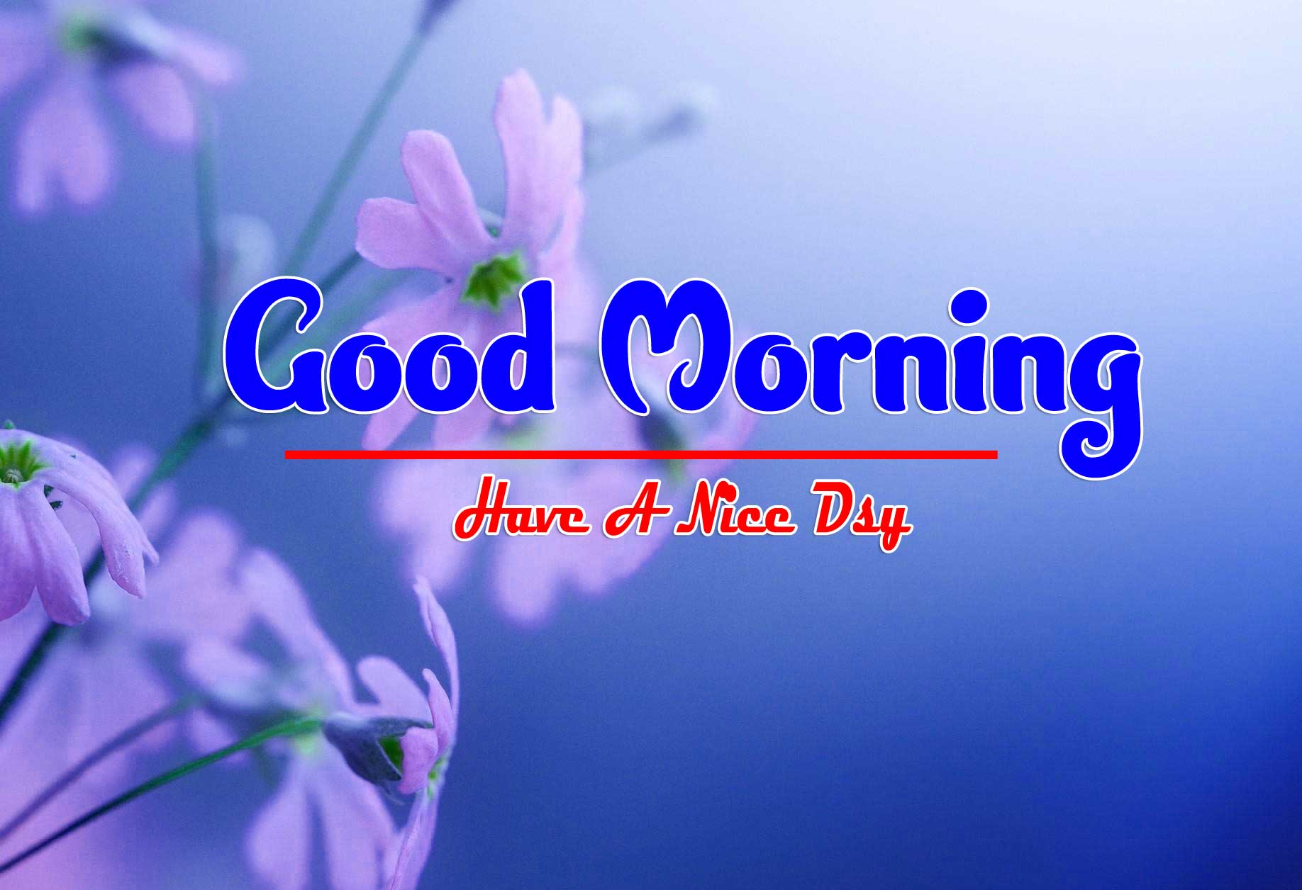 Beautiful Free Good Morning Wallpaper Download