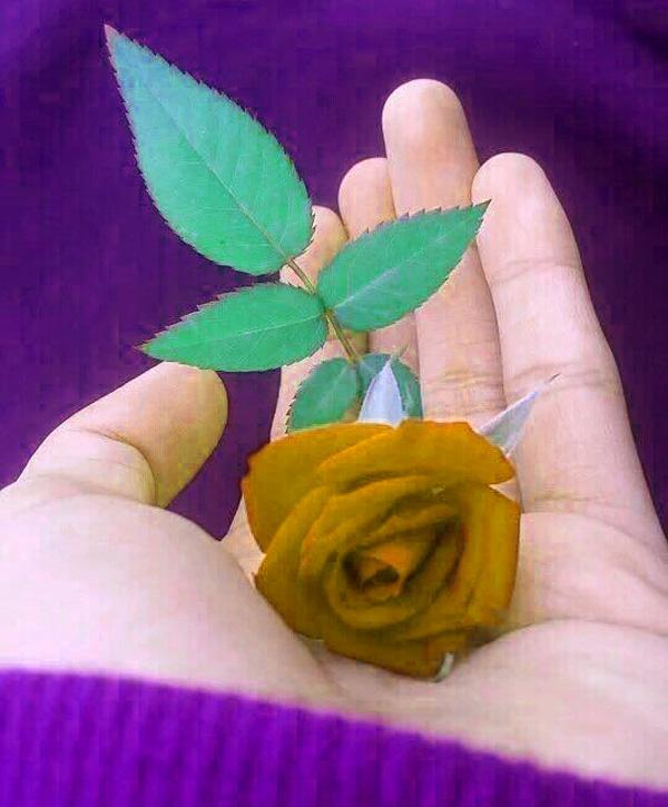 Beautiful Whatsapp DP Profile Images 26