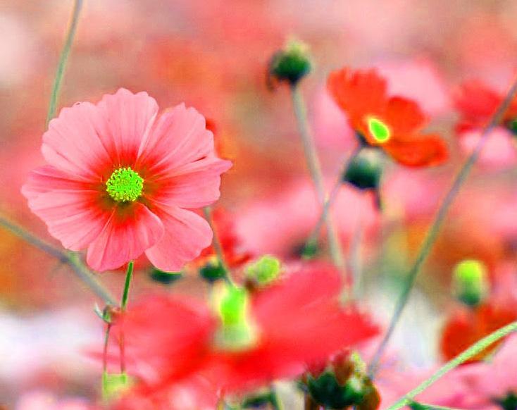 Beautiful Whatsapp DP Profile Images 3