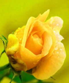 Beautiful Whatsapp DP Profile Images 62