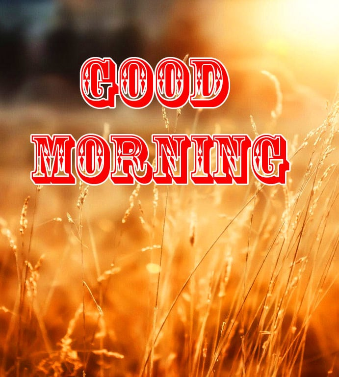 Best New Good Morning Wishes Images Pics Download 1