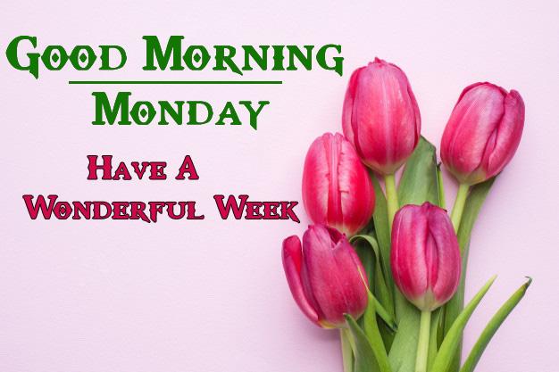 Flower Full HD Monday Good Morning Pics Download 1