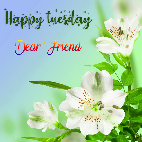 Flower Good Morning Tuesday Pics Pictures Download
