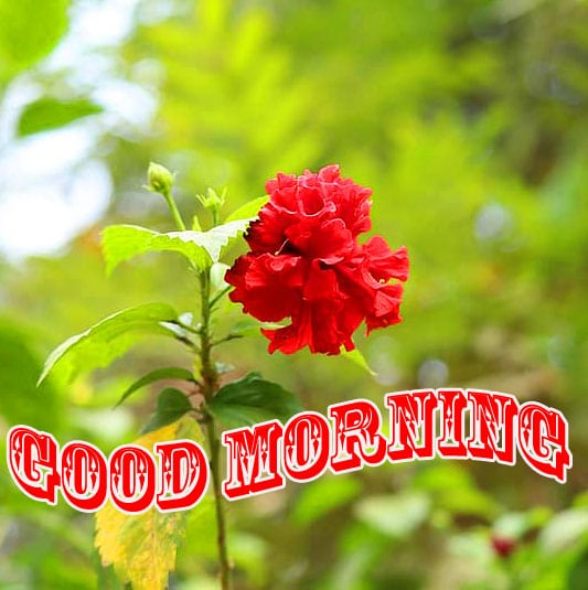 Flower Good Morning Wishes Images HD 1