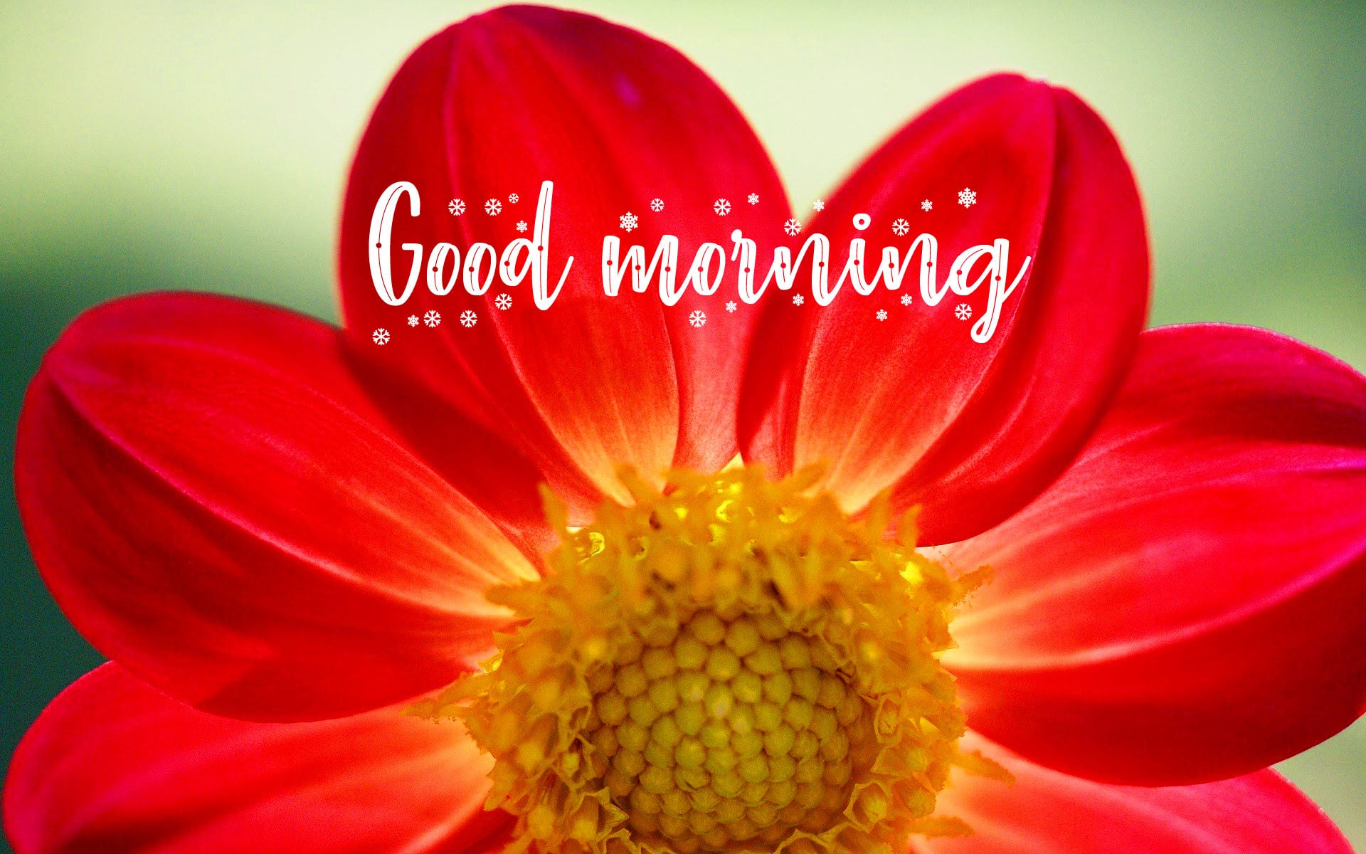 Flower Good Morning Wishes Images Pics Download 1
