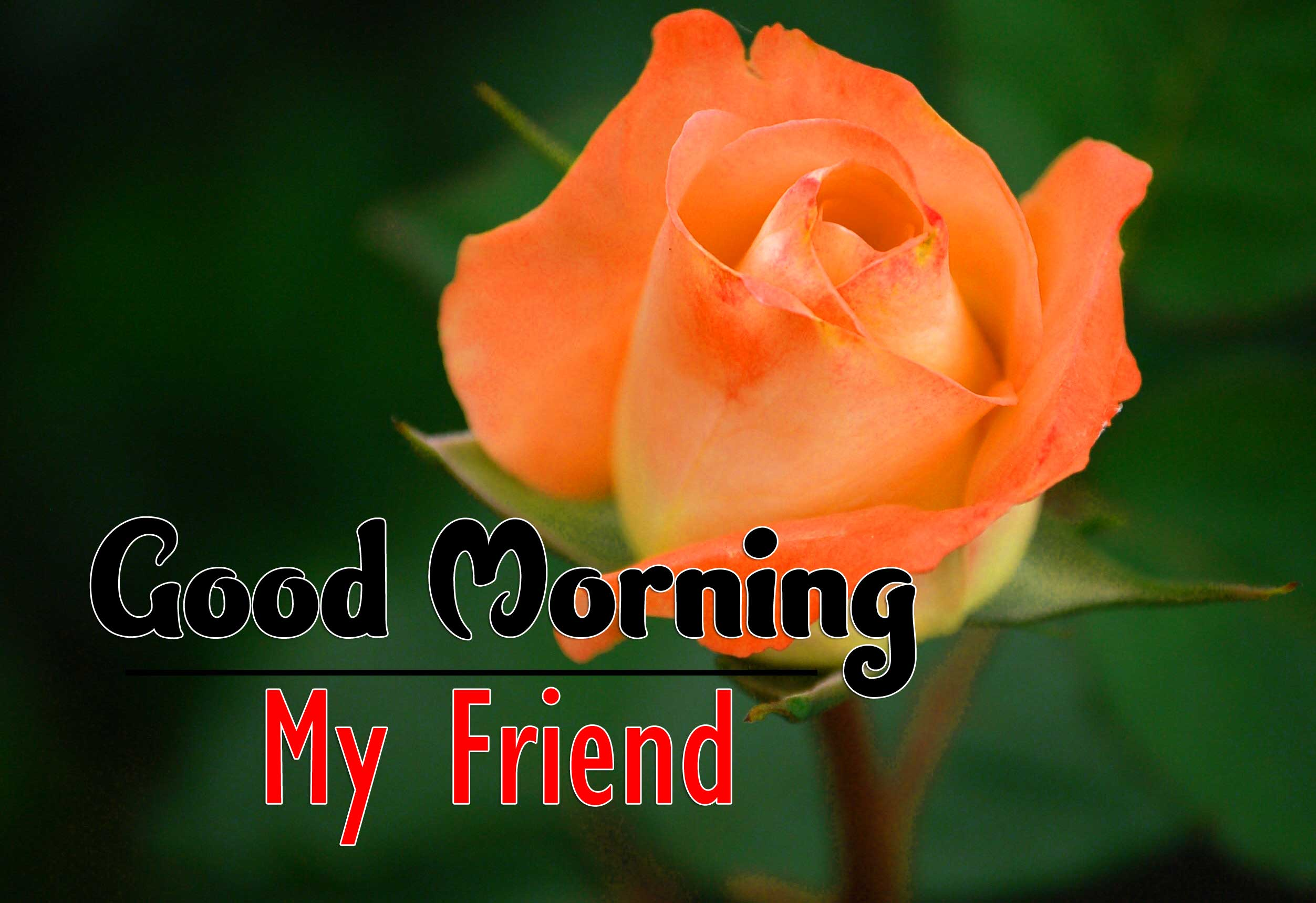 Flower Good Morning Wishes Pics Download 2