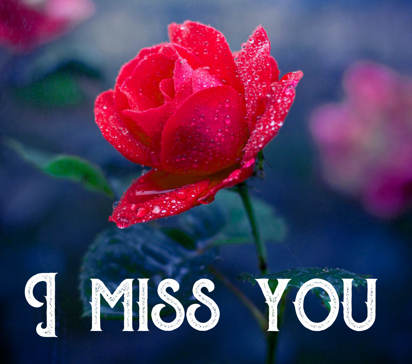Flower I Miss you Photo Download