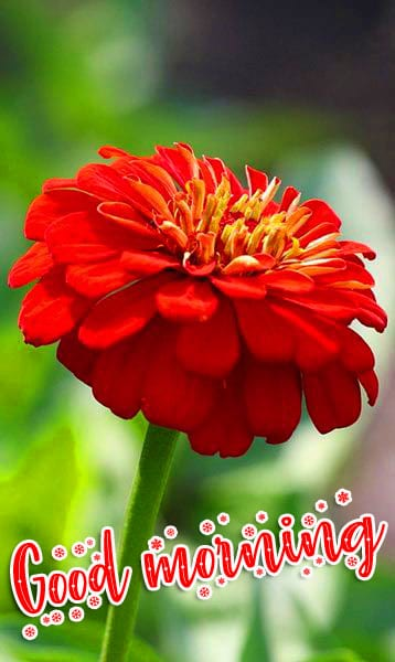 Flower New Good Morning Wishes Images Download 1