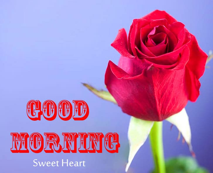 Flower Rose Good Morning Wishes Images Download 1