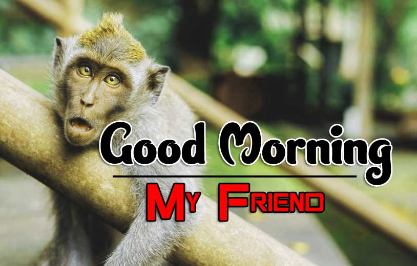 For Friedn All Funny Good Morning Images Download Free