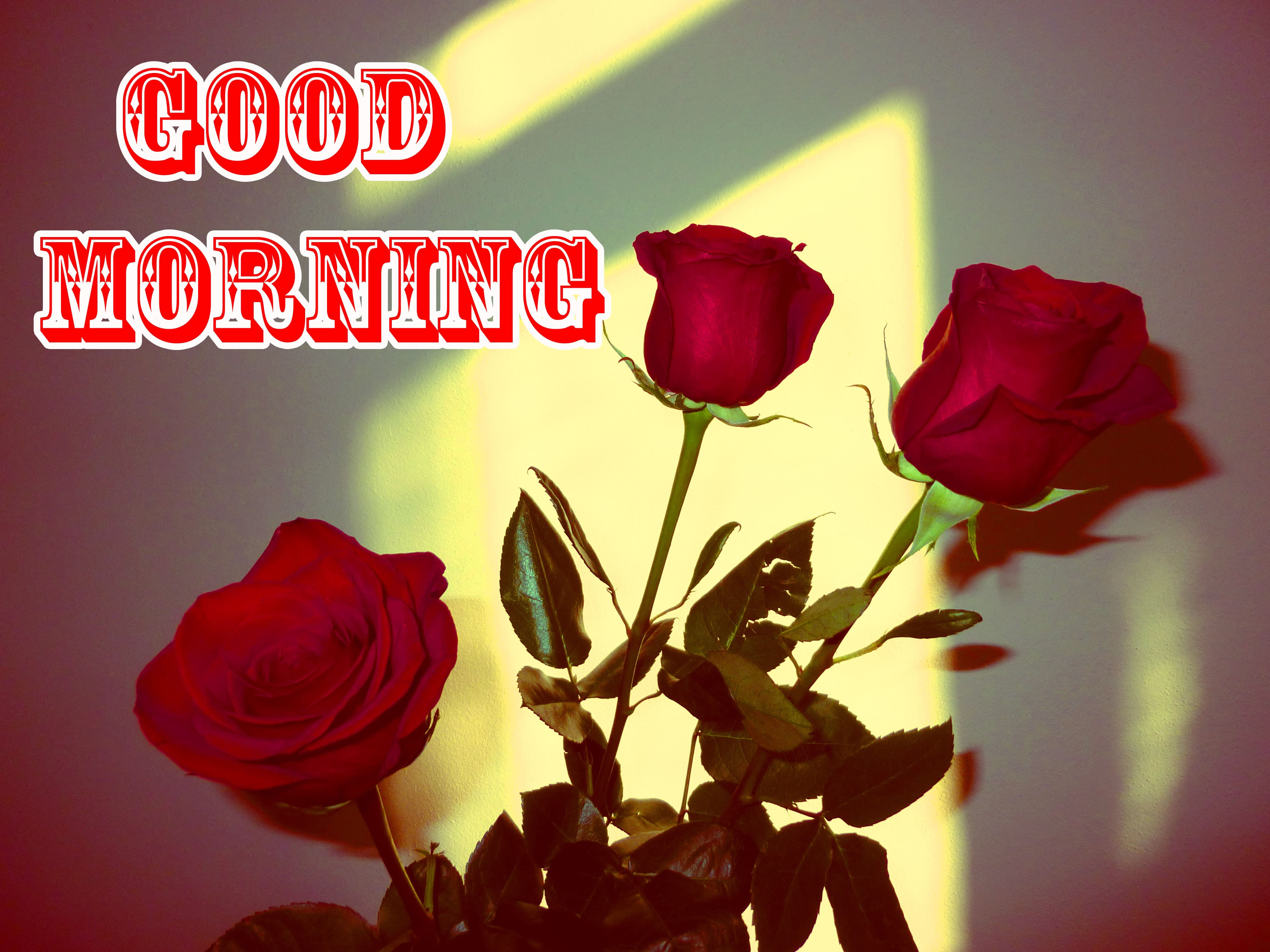 For Girlfriedn Free Good Morning Wishes Images Download 1