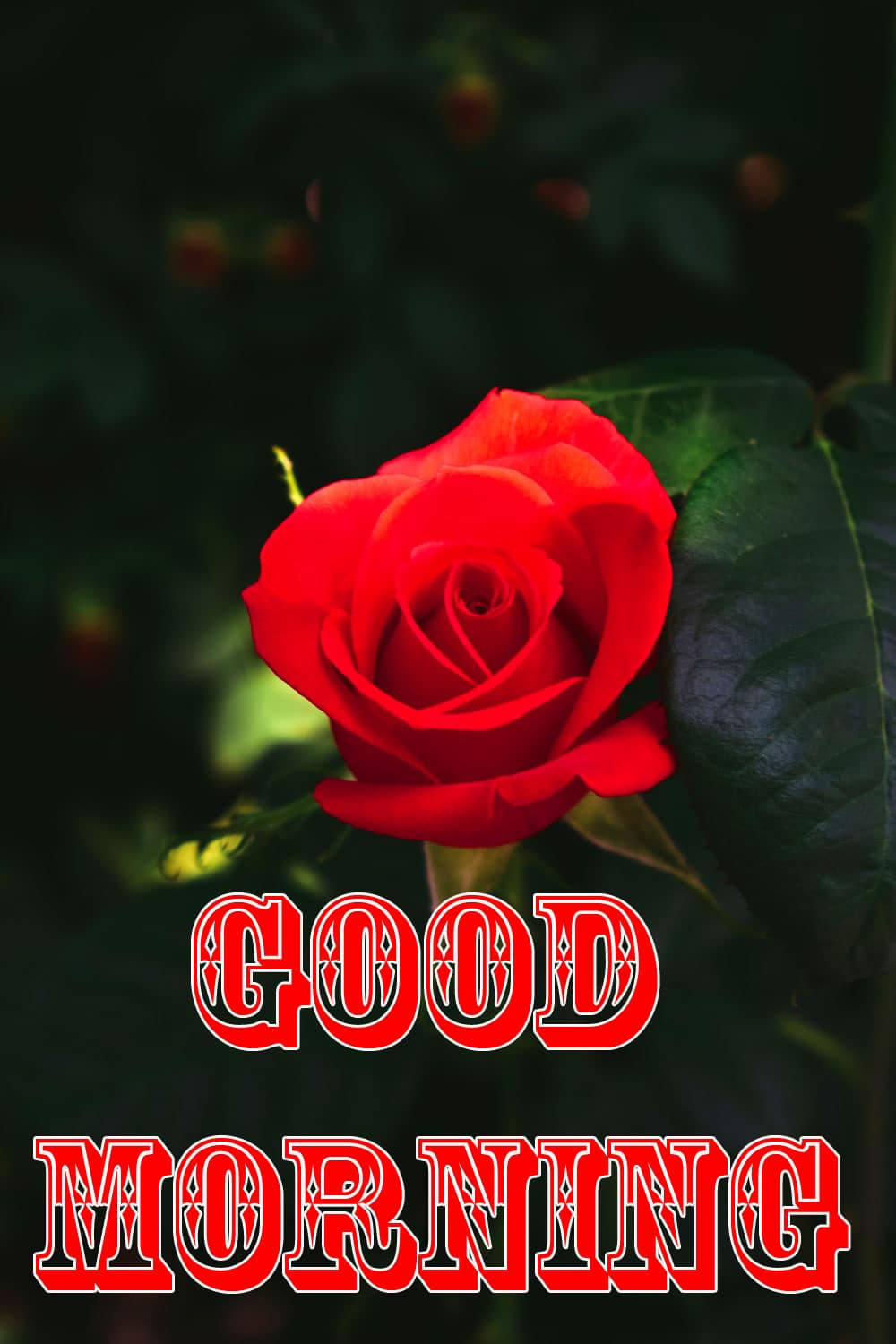 Free 3d Good Morning Wishes Images Download 1