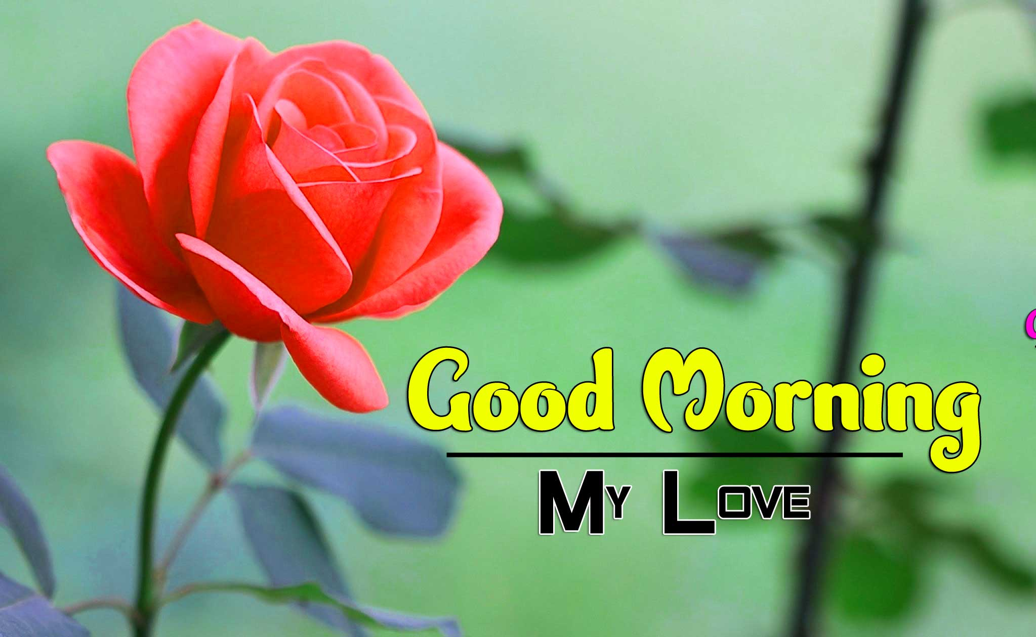 Free Flower Good Morning Wishes Wallpaper Download